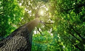 Organic Tree Care