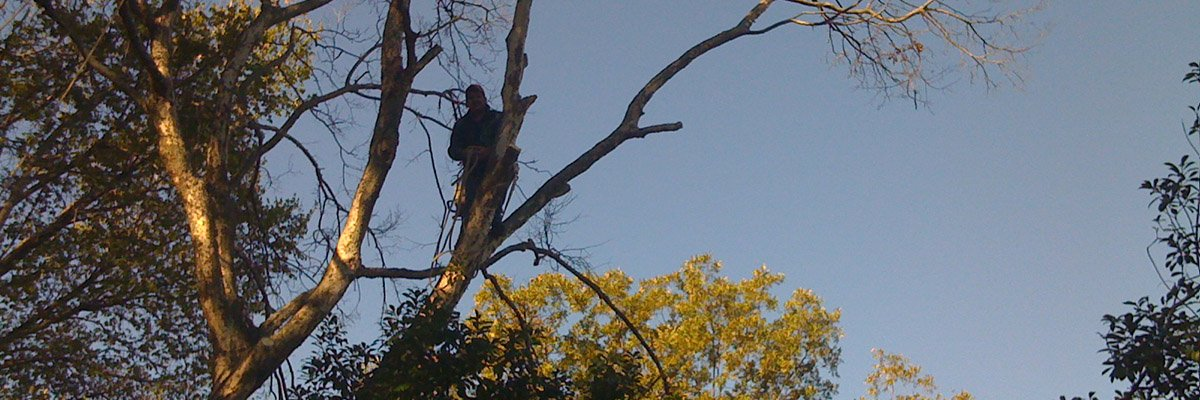 Tree Service In Houston